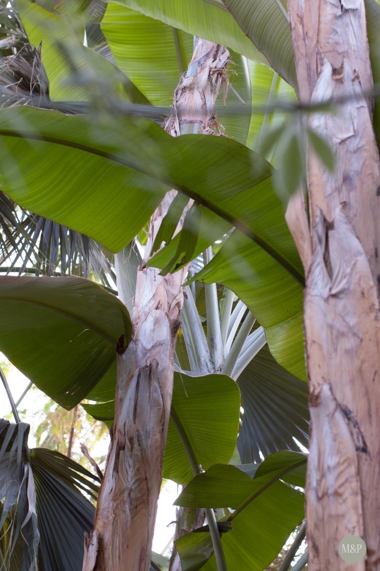Dans la serre tropicale- Jardin des Plantes Paris - mars 2013