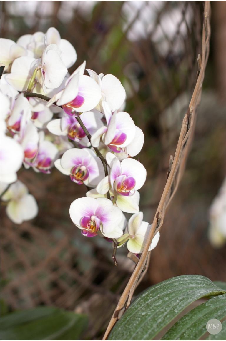 Exposition 1001 orchidées -- Jardin des Plantes Paris - mars 2013